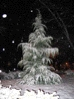 Snowy Tree, first snow of 03