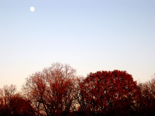 A full moon shines at dusk over Rock Creek Park.